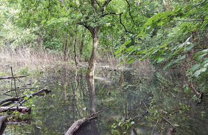 The Environment Agency is leading a project to improve 7 wet woodland areas. Image courtesy of Yorkshire Wildlife Trust.