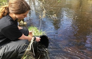 Image shows Jess Anson releasing sea trout into the river