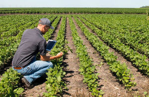 Agronomist uses a mobile tablet in an agriculture field
