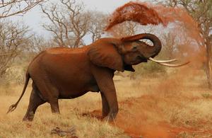 S300 elephant 111695 1280