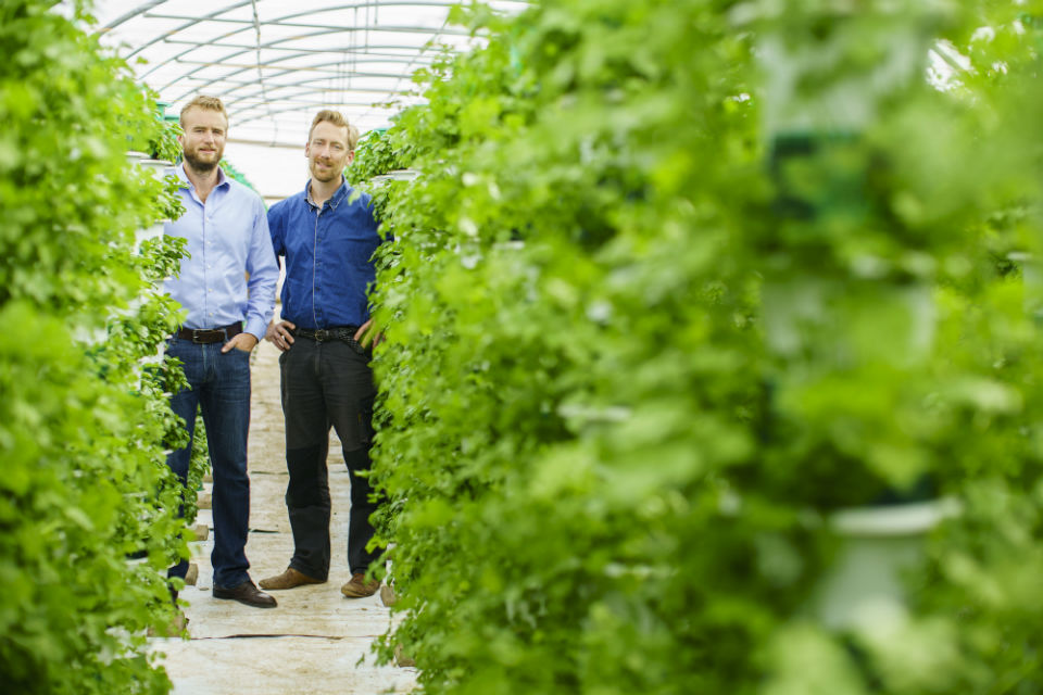 Saturn Bioponics founder Alex Fisher and R&D manager, Arnoud Witteveen, surrounded by crops