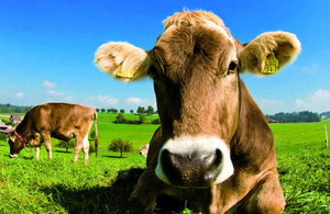 Changes in chemical standards affecting animal feed regulation