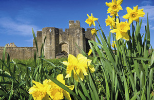Daffodils outside Caerphilly Castle