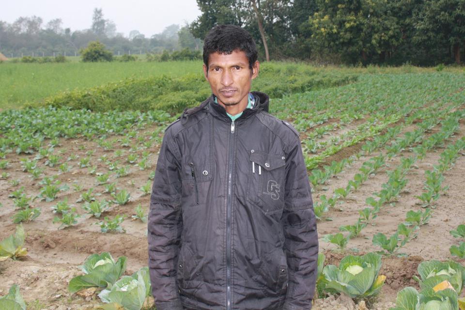 Daya Ram Tharu stands near his cabbage plot. Picture: Robert Stansfield/DFID