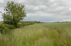 Photograph of a field