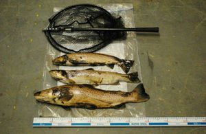 Two men have been fined £420 each for poaching and using illegal fishing equipment in County Durham.