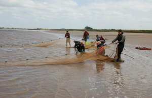 Netting the Severn Estuary for shad tagging