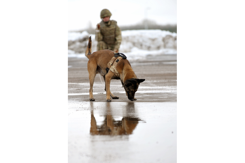 A British Army military working dog and his handler