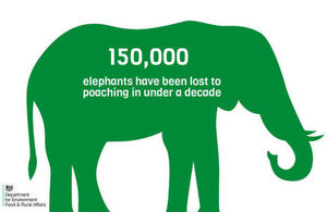 Infographic showing that 150,000 elephants have been lost to poaching in under a decade