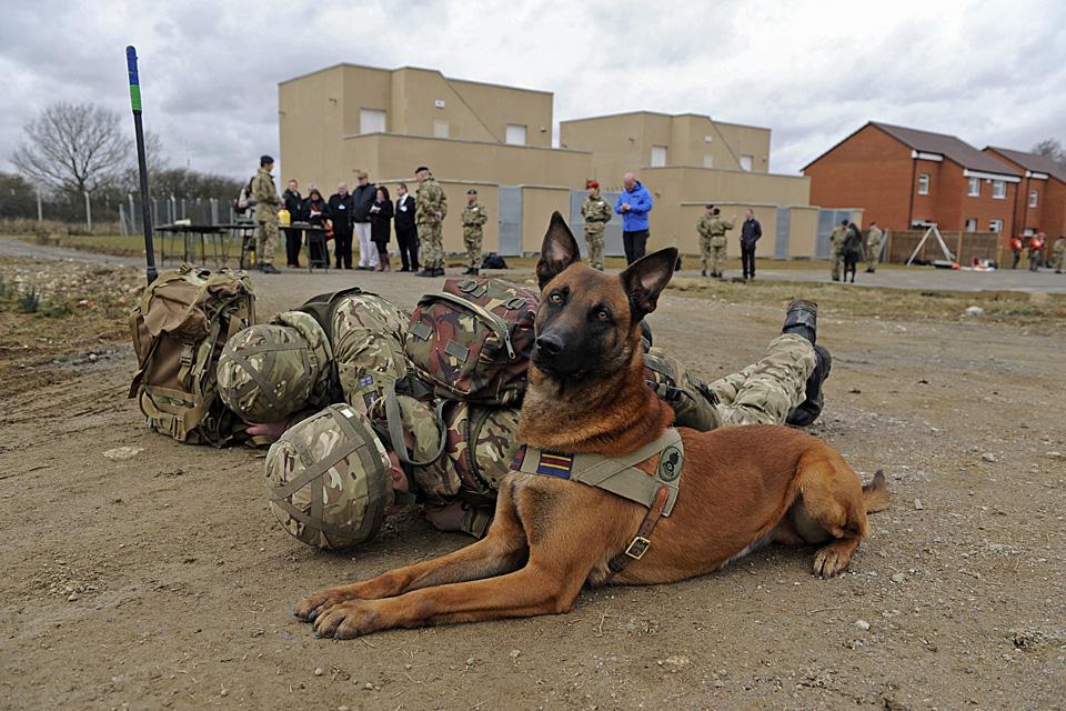 Bomb Disposal Dog Training