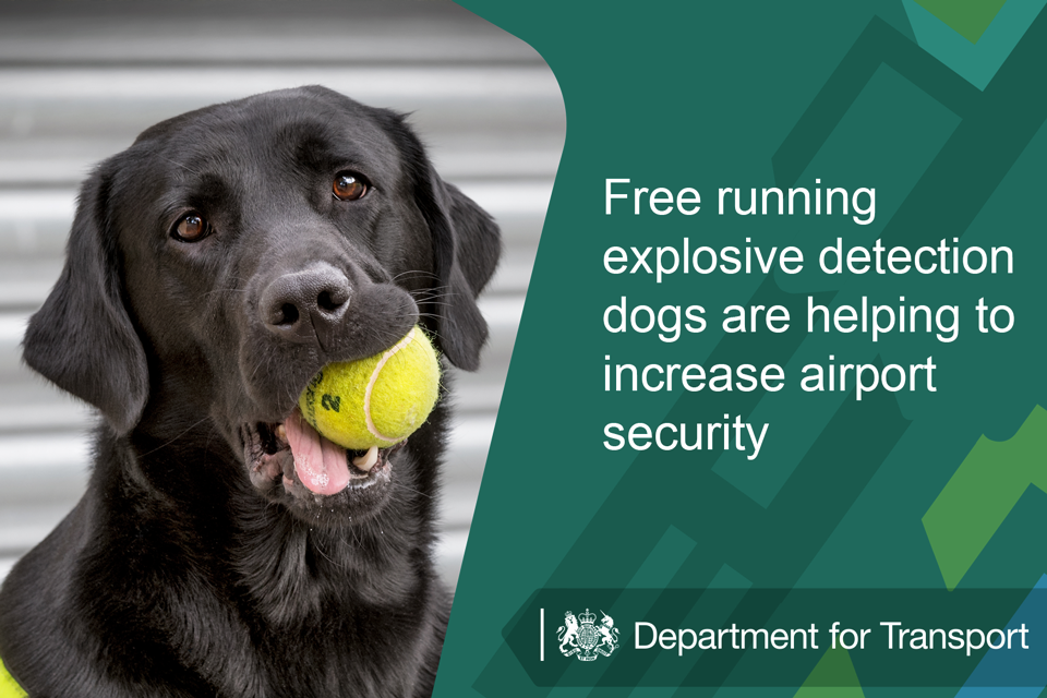 Free running explosive detection dogs are helping to increase airport security.