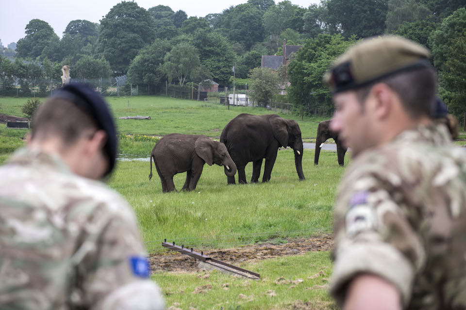 Military personnel pictured looking on at two elephants