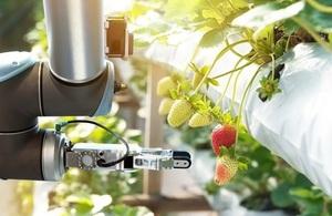 Robotic strawberry picker