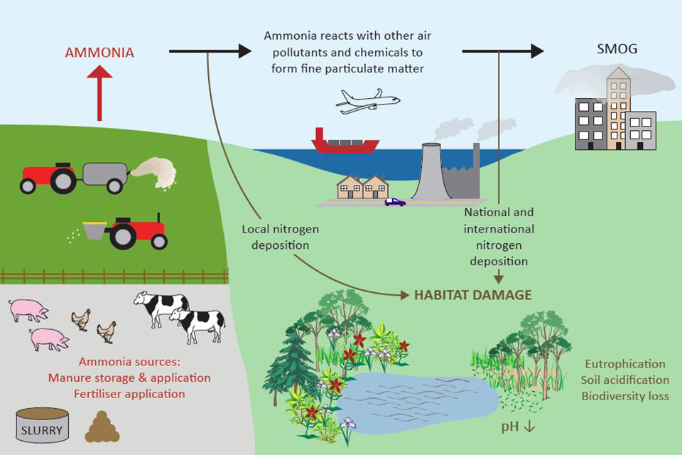 Figure 3: The environmental impacts of ammonia pollution.