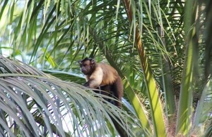 Monkey in trees