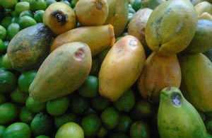 Picture of rotten mangoes and limes