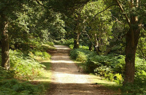 Grants for creating woodland available all year round - GOV UK