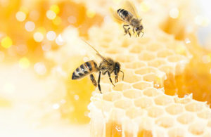 Bees and honey picture