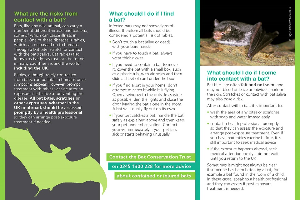 Bat contact and rabies risk leaflet