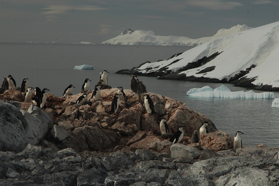 A group of penguins standing on rocks