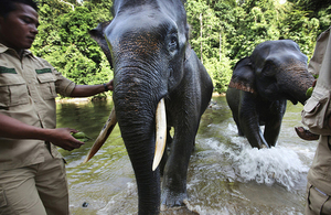 Forest rangers protecting elephants in Indonesia. Picture: Abbie Trayler-Smith/Panos