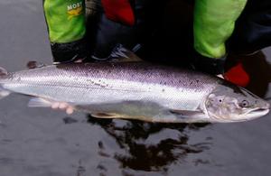 salmon byelaw announcement