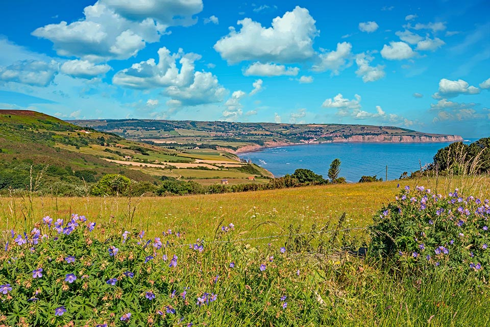Environment bill policy paper cover picture - photo of landscape with wildflower hedgerow and coast
