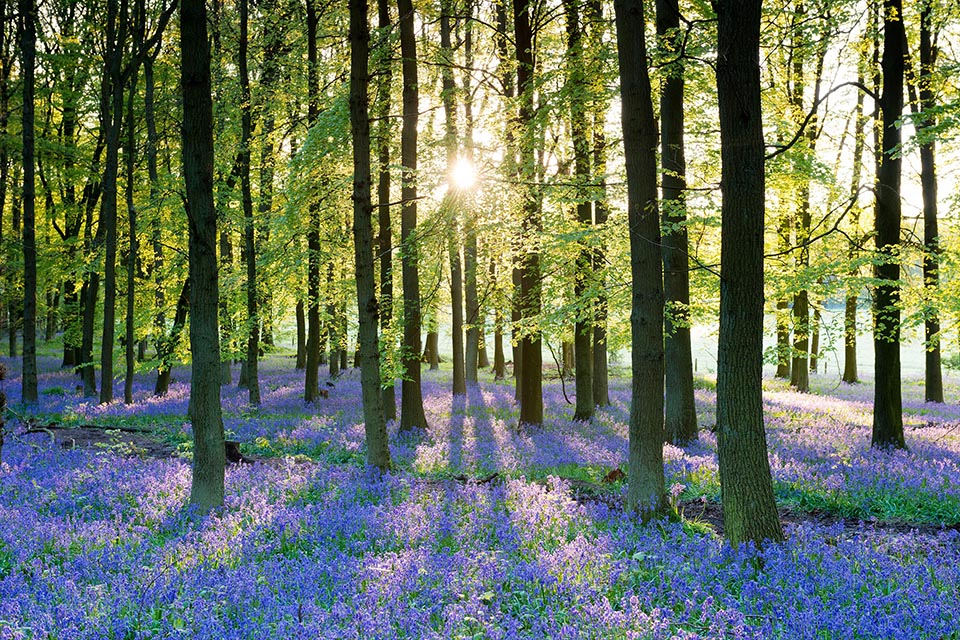 Environment bill policy paper - photo of a bluebell wood