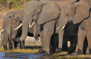 Elephants at a water hole