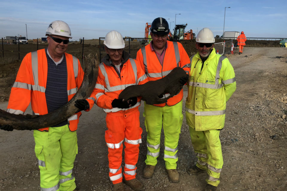 The Highways England team displaying woolly mammoth tusks and woolly rhino skulls