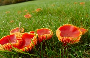 Fungi at The Leasowes in Halesowen near Birmingham