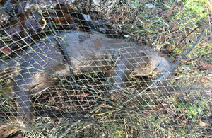An otter has been killed by an illegal crayfish trap