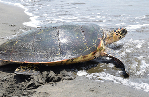 World Wildlife Day: A helping hand to turtles and mangroves