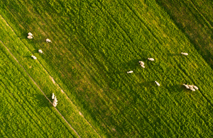 An aerial view of sheep grazing on a farm in South Africa.