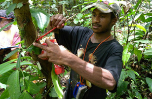 A para-ecologist in the Papua New Guinea rainforest collects measurements from a tree