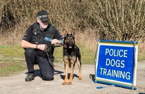 Police Dog Meti with his handler Richard Burley