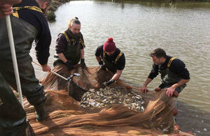 Three National fish farm staff standing in water holding a large net full of fish. One staff member is on the bank with a landing net on a pole