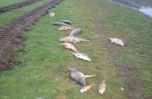 Fish killed by a pollution incident lay on a riverbank