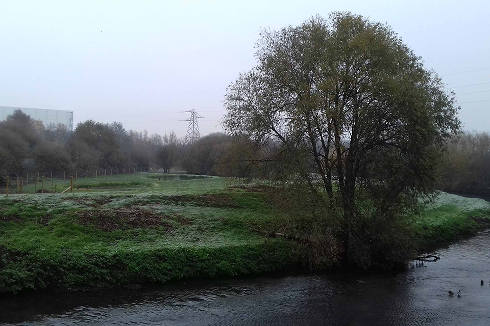 A new grassland and wetland with pond and trees in the frost