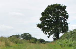 A picture of a tree near a footpath in the countryside