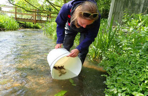 An Environment Agency officer releases rescued crayfish from a bucket into a river