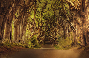 Trees Road Northern Ireland