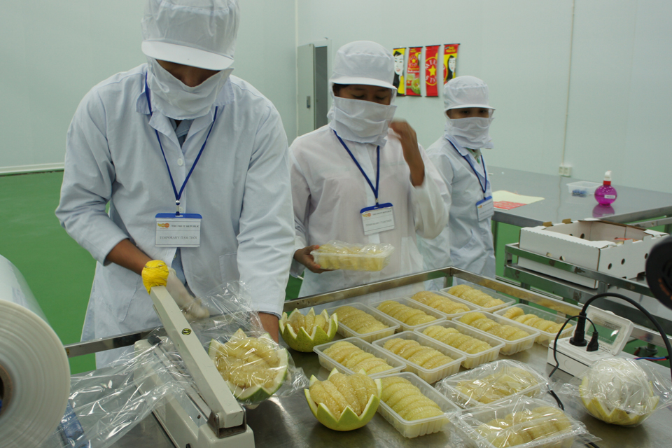 Fresh-cut production line, partly funded by UK aid, processes pomelo for both domestic and export markets. Picture: DFID