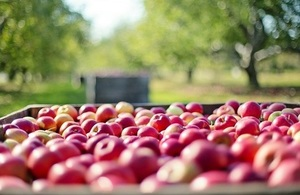 A large crate of red apples int he foreground with green trees in the background.
