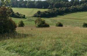 Downland with woodland in distance.