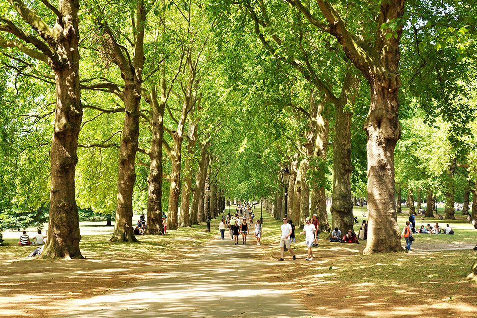 People walking along a park path which is surround by rows of trees