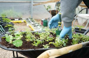 Offender doing gardening