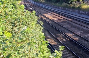 Picture of trees by a railway line.