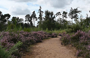 Heath and woodland at the Sandy headquarters of the Royal Society for the Protection of Birds