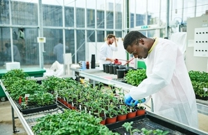 Scientist conducting crop research